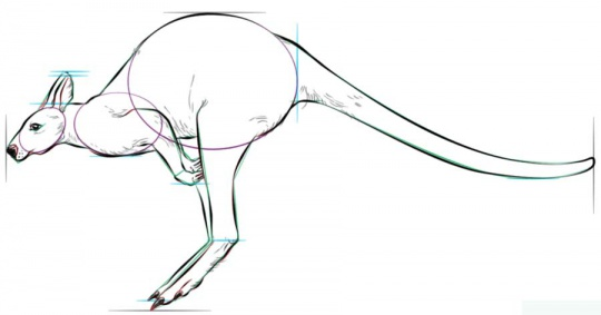 hopping-kangaroo-6-how-to-drawک