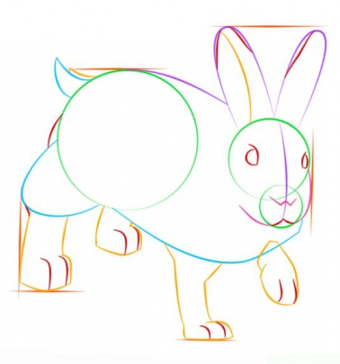 snowshoe-hare-7-how-to-drawخرگوش