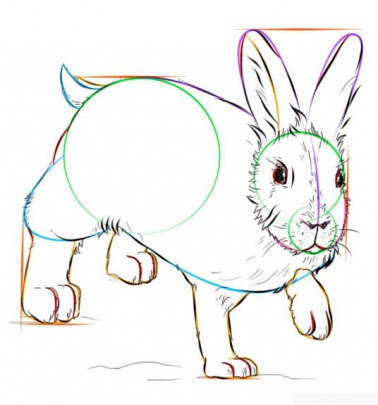 snowshoe-hare-8-how-to-drawخرگوش