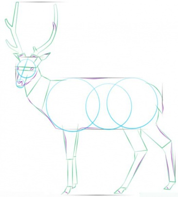 white-tailed-deer-4-how-to-drawث