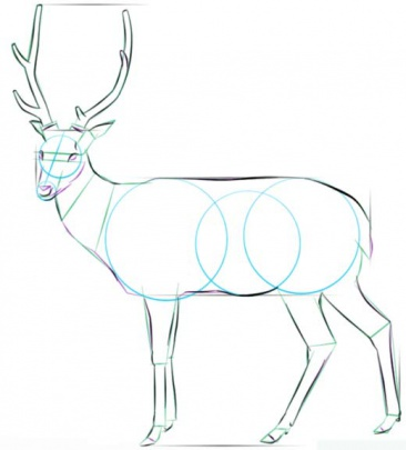 white-tailed-deer-5-how-to-drawث