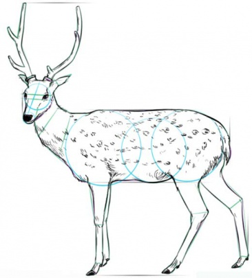 white-tailed-deer-6-how-to-drawث