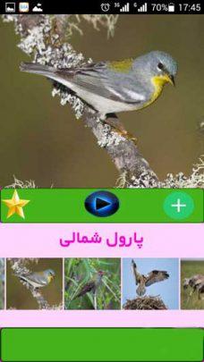 صدای-پرنده