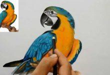پرنده