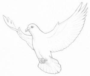 آموزش نقاشی کبوتر۹