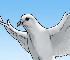 آموزش نقاشی کبوتر۱۰