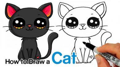 گربه-زیبا۰