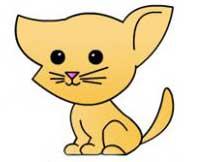 گربه۵