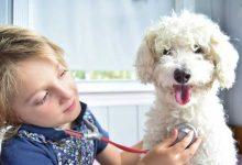 تصویر از ۹ تا از بهترین حیوان های خانگی برای کودکان (سالم بی خطر)