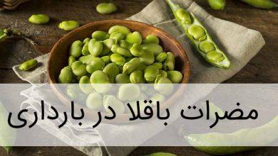 باقلا