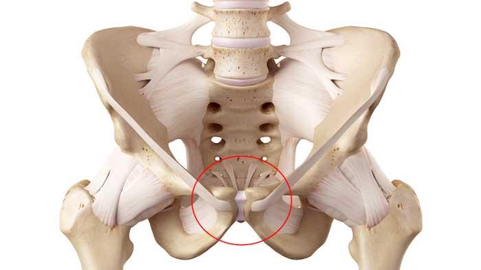 ساختار استخوان لگن
